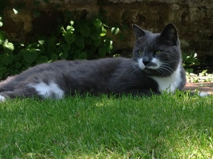 William in the garden